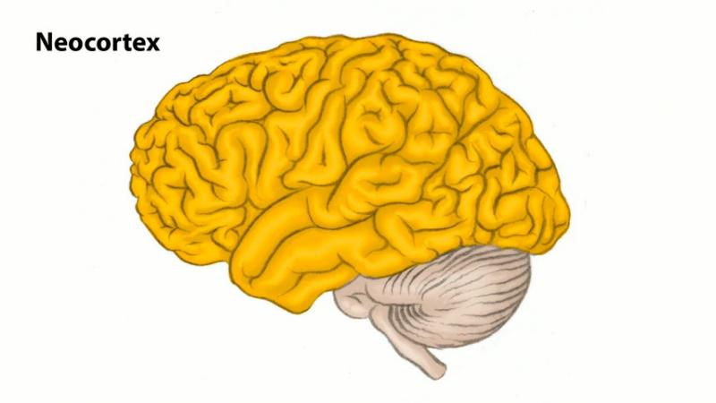 Neuro 2-Hypothalamus