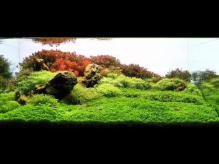 2007-2014 IAPLC Aquariums, aquascapes top winners JUMBO compilation