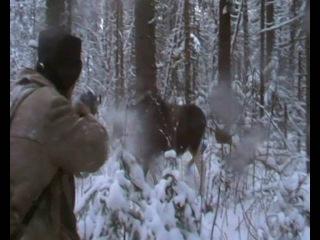 Охота на лося. часть 2. выстрел