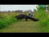 Гигантский аллигатор-крокодил