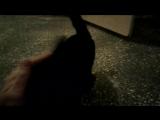 Особые приметы чёрного кота
