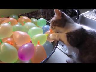 Кот и шарики с водой