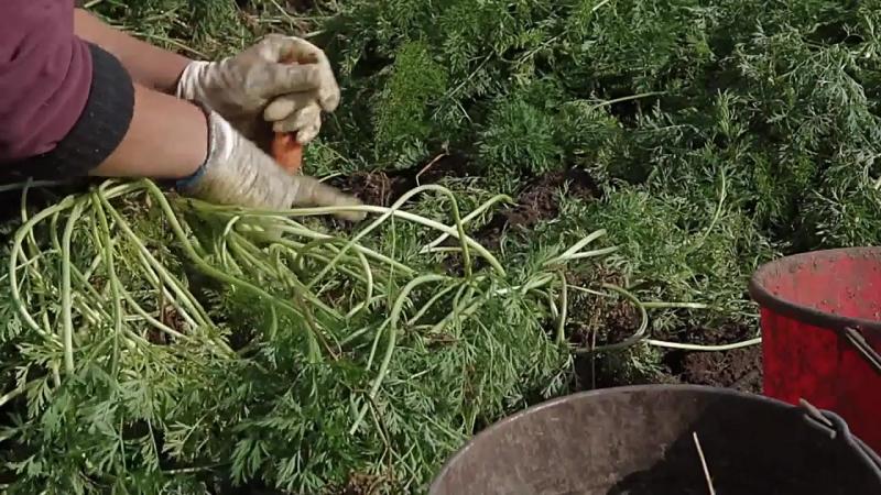 Праця аграрія – одна з найважливіших на Землі!