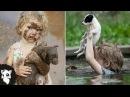 5 СЛУЧАЕВ КОГДА ЛЮДИ НЕ ОЧКАНУЛИ И СПАСЛИ ЖИЗНЬ Белый кот