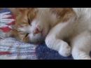 Корзиночка вставай пары проспишь кот ну мам