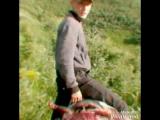 Ауылдағы қызықты сәттер...