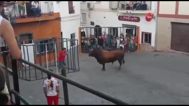 Toros Cogida Impactante - Toro dentro de la Jaula -
