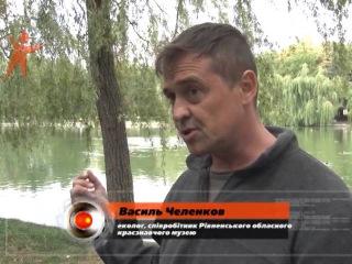 В Ровно Басивкутске озеро в этом году самый грязный за последние 20 лет