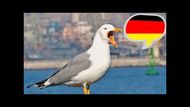 Учитесь понимать немецкий на слух. Часть 1.