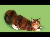 Семинар 4. Проблемы осанки. Кошачий синдром . Синдром Кентавра. Часть 1