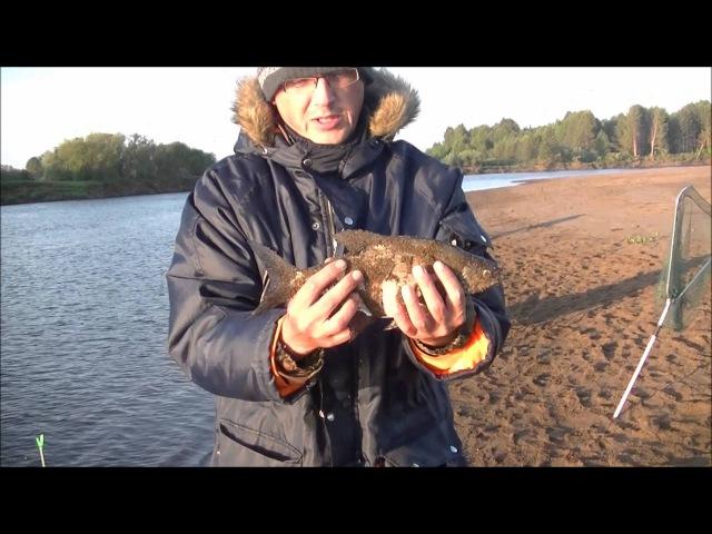Рыбалка с вечера 27 мая по день 28 мая с Ыб Фидер на Леща Подлещика и мой первый подъязок в сезоне