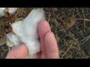 Выращивание хлопка в Херсоне. Вата