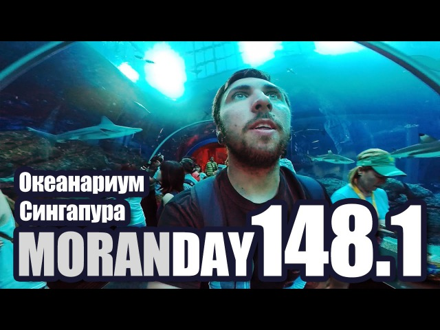 Moran Day 148 1 Океанариум Сингапура