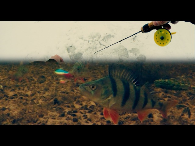 Зимняя Рыбалка 2017 | Таскаю Окуня на Балансир