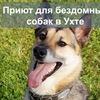 Приют для бездомных собак в Ухте