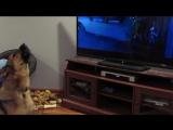 Собака реагирует на вой в Зверополисе.