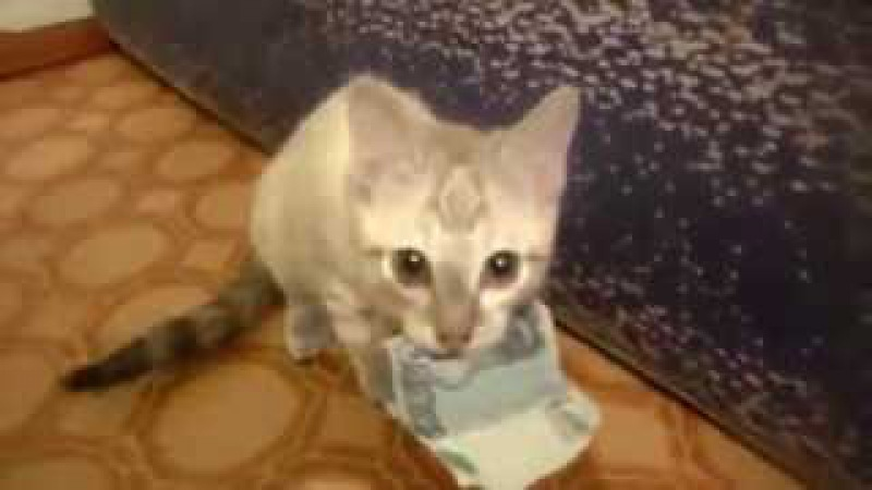 Котенок украл деньги (касарь 1000 рублей) | BigFail