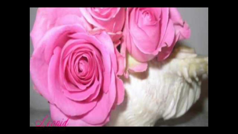 Валерий Залкин Алые розы