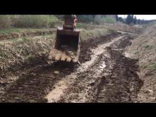 Экскаваторный ковш вытаскивает из грязи второго олененка (Такома, штат Вашингтон, США)