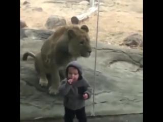 [Kavkaz vine] животные инстинкты все равно сильнее