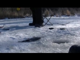 Зимняя рыбалка в тайге. Бешеный клёв!