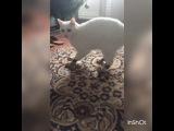 tata_f3 video