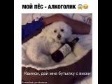 Пёс алкоголик - горе в семье