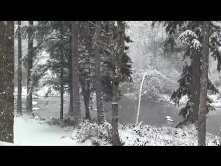 Падающего снега и зимнего леса