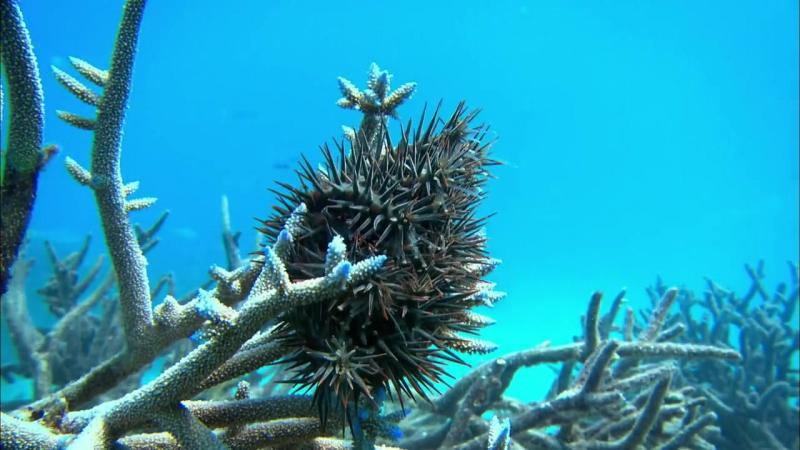 Жизнь на Большом Барьерном рифе 02