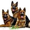 Собака моей мечты: Питомник  - von FORESTHOFF