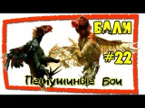 Бали #22 Петушиные бои на Бали (Cock fights in Bali)