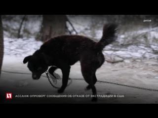 Волонтеры обнаружили 200 мертвых животных в приюте для бездомных собак