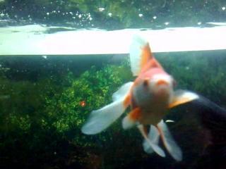 Рыбка золотая, палка-селфи не простая...