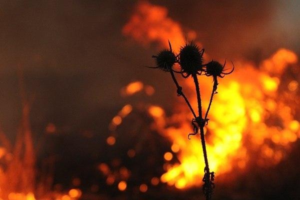 ЭКСТРЕННОЕ ПРЕДУПРЕЖДЕНИЕ МЧС: ожидается чрезвычайная пожароопасность (5 класс)