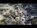 Кораллы и морской огурец