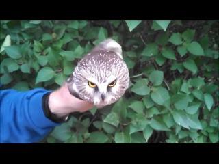 Upside Down Owl
