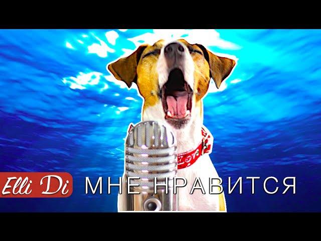 Егор Крид Мне нравится СОБАКА ДЖИНА ПОЁТ Elli Di Собаки