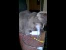 А ваша кошка умеет чихать