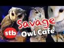 Owl Cafe in Akihabara, Tokyo, Japan ★ SoloTravelBlog