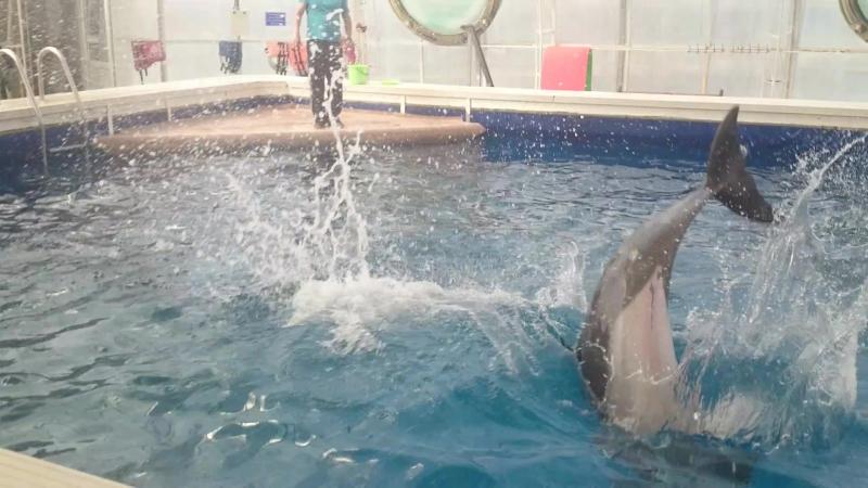 Дельфины Донузлава
