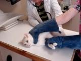 Адский кот на приеме у ветеринара