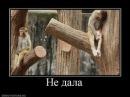 Вася Рулит-Суки