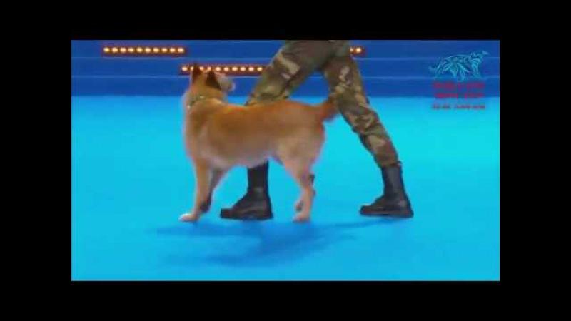 Когда она лежала на сцене с собакой, судьи не ожидали увидеть первоклассное шоу