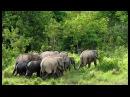 Дикая природа Таиланда. Флора и фауна страны красот и контрастов. Фильм Nat Geo WILD HD 28.11.2016