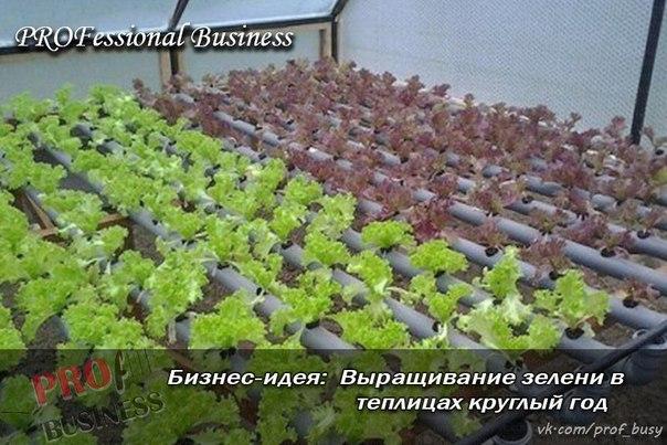 Как сделать бизнес на выращивании зелени