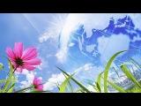 Исцеляющий Настрой на Привлечение Радости - Sev