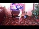 Прикол! Голопопые фанаты Димы Билана (ребенок танцует)
