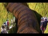 Biggest Python Snake - Giant Anaconda | Worlds Biggest Snake Found in Amazon River #2