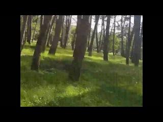 Gedebey rayonu ~ Sahzade meşesi ( 2 ) Леса Азербайджана