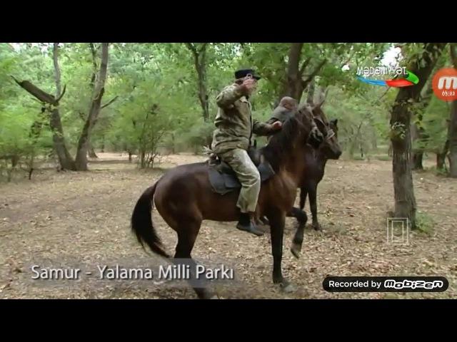Azərbaycan təbiəti. Samur-Yalama Milli parkı Леса Азербайджана